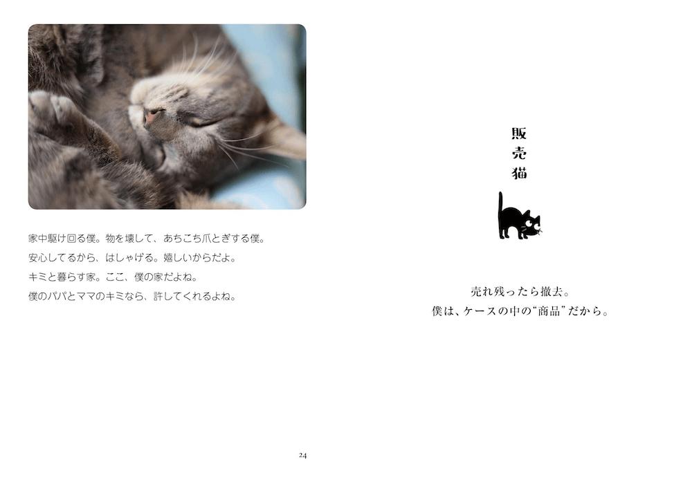 元野良猫・ダンくんの写真と飼い主さんが添えたポエム by 写真集「猫は家族」