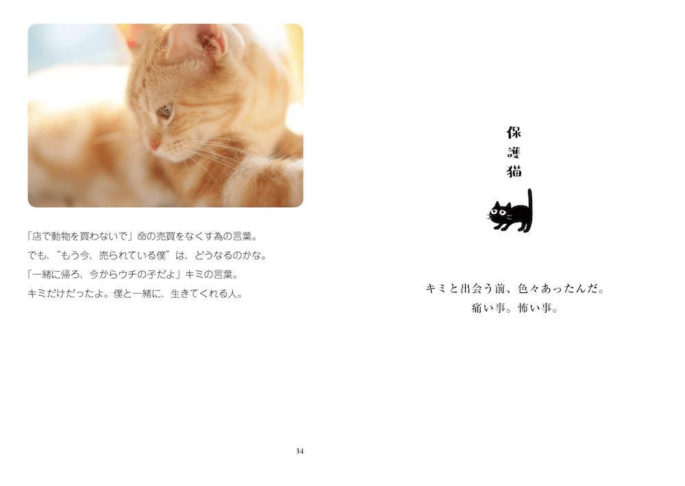 アメリカンショートヘアのきなちゃんの写真と飼い主さんが添えたポエム by 写真集「猫は家族」