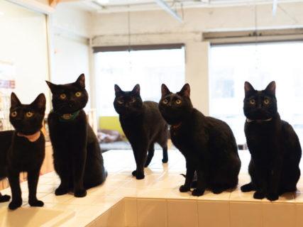 遠隔でマンチカンにエサやり体験も!12名の作家が参加するチャリティー猫イベント「ねこ専」