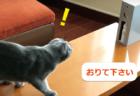 これは新しいかも!?水を噴霧して猫に上ってはダメな場所を教える装置「マニャーdeシュ!」