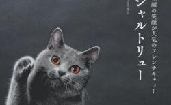 全48種類のニャンコを収録!猫の歴史から生態まで学べる「世界中で愛される美しすぎる猫図鑑」