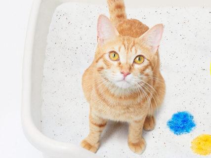 ニャンと砂の色が5色に変化するッ…!自宅で手軽に尿検査できる猫砂「しぐにゃる」誕生