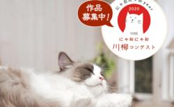 愛猫について一句詠むと豪華賞品の獲得チャンス!カインズが「にゃおにゃお川柳」を開催中