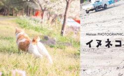 コロナ禍で苦境の保護猫カフェを支援する取り組み、チャリティー公募展「イヌネコLovers」