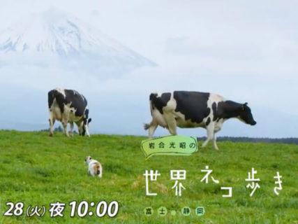 最新話は富士山と暮らす猫たち!岩合光昭の世界ネコ歩き「富士・静岡」7/28に放送
