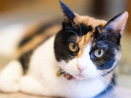 1500枚のネコ写真が大集合!大規模パネル展「ねこにすと展」が有楽町マルイで開催&人気投票もあるニャ