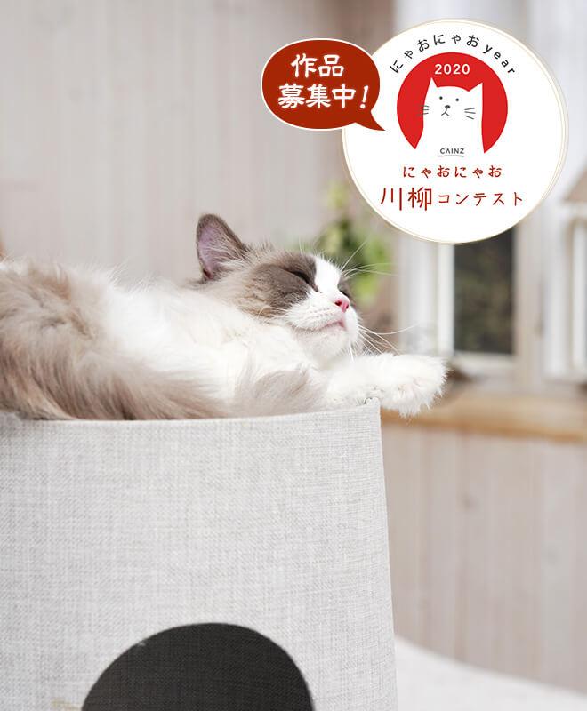 愛猫の川柳を募集するカインズの「にゃおにゃお川柳」