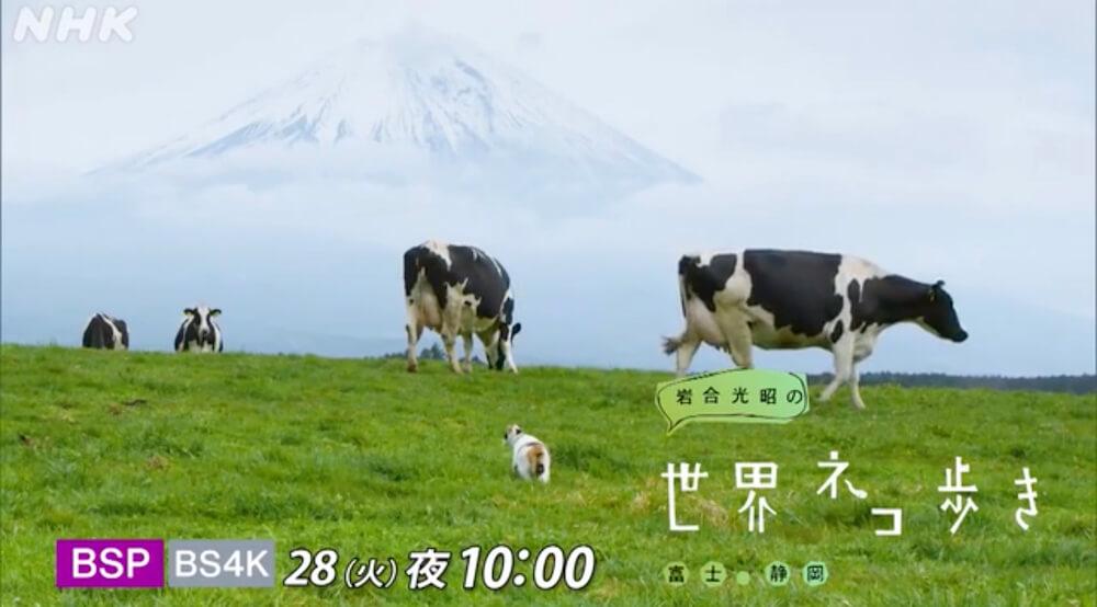 NHK BSプレミアム 岩合光昭の世界ネコ歩き「富士・静岡」メインビジュアル