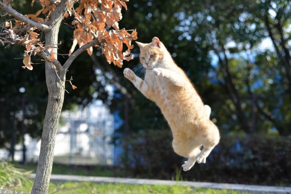 高くジャンプして宙に浮いた茶トラ猫のイメージ写真