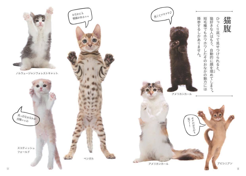 猫種ごとのお腹を比較した「猫腹」のページ by 書籍『世界中で愛される美しすぎる猫図鑑』