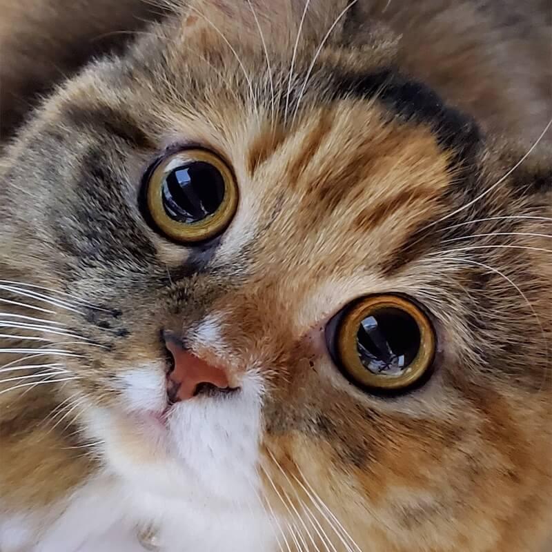 目をまん丸くした猫の写真 by ねこにすと展19