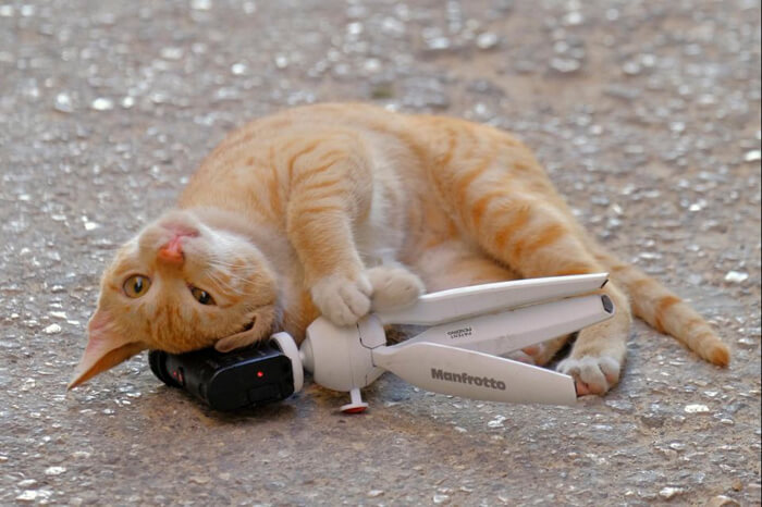 マルタの猫写真 by クラゴンオヤカ