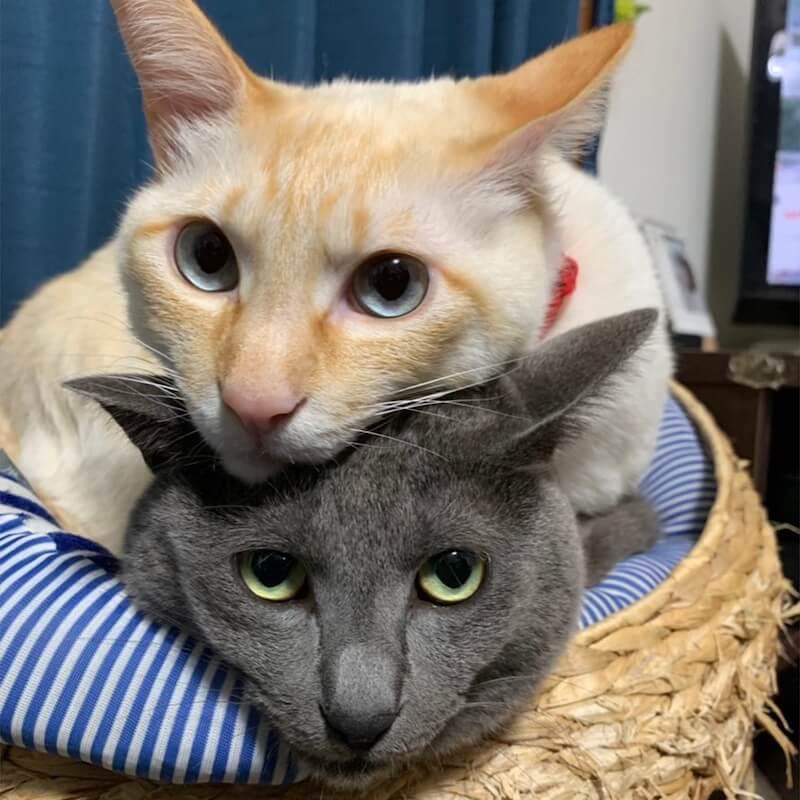 頭の上に乗っかる仲良し猫たちの写真 by ねこにすと展19
