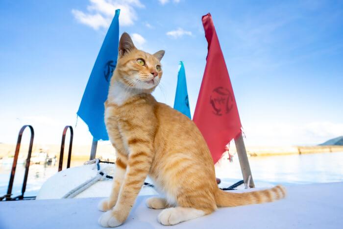 猫の写真 by 町田奈穂