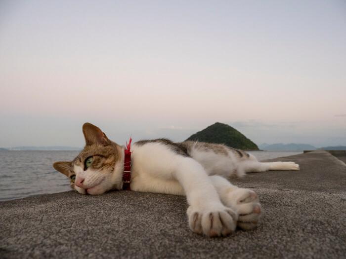 海辺で寝転ぶ猫の写真Nyandscape by 大洲治