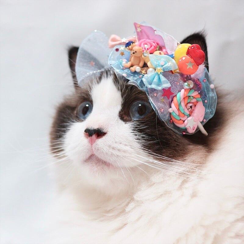髪飾りをつけた猫の写真 by ねこにすと展19