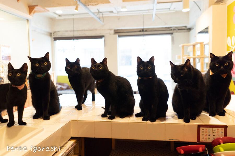 黒猫だけの保護猫カフェ「ねこびやか」 by 五十嵐健太