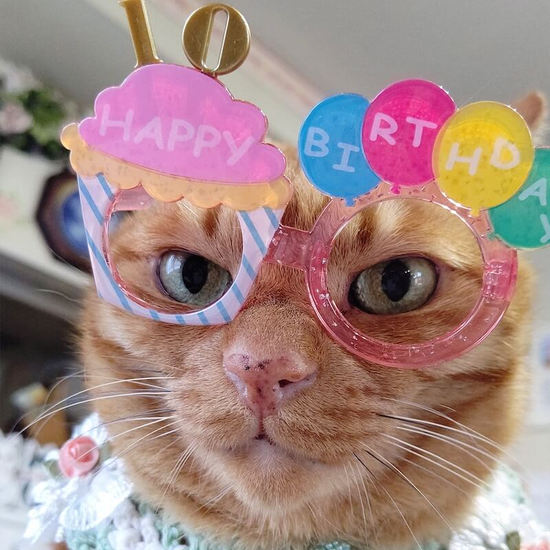 楽しそうなメガネを掛けた猫の写真 by ねこにすと展19