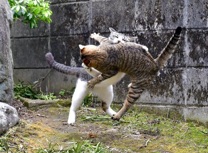 本気の薩摩猫 by さつまのねこ撮り屋 大鷹