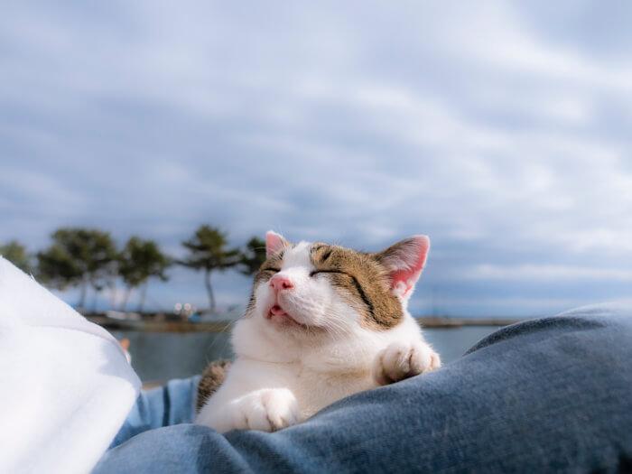 外で人の上で気持ちよさそうに眠る猫の写真 by wada katsuzo