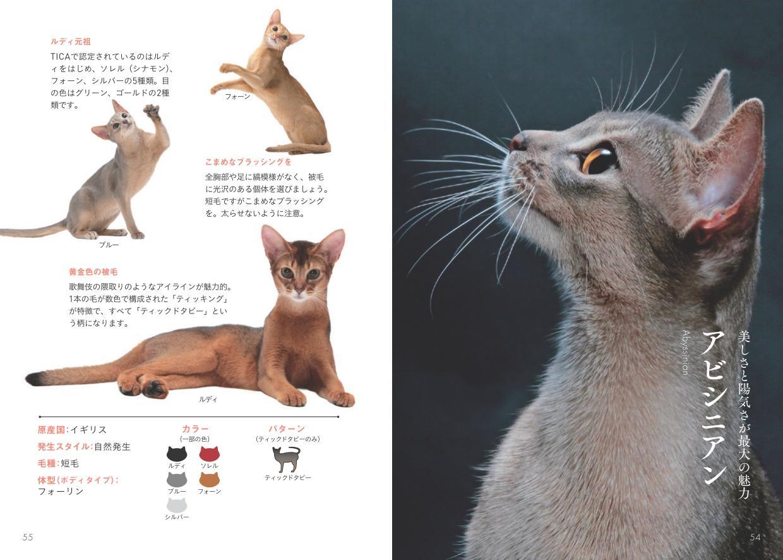 アビシニアンの写真と解説ページ by 書籍『世界中で愛される美しすぎる猫図鑑』
