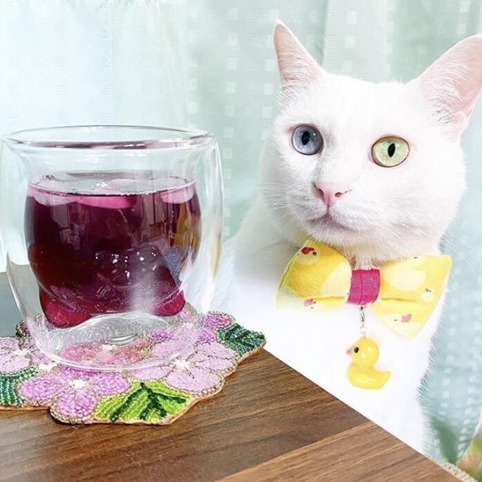 ねこ型ダブルウォールグラスとオッドアイの猫