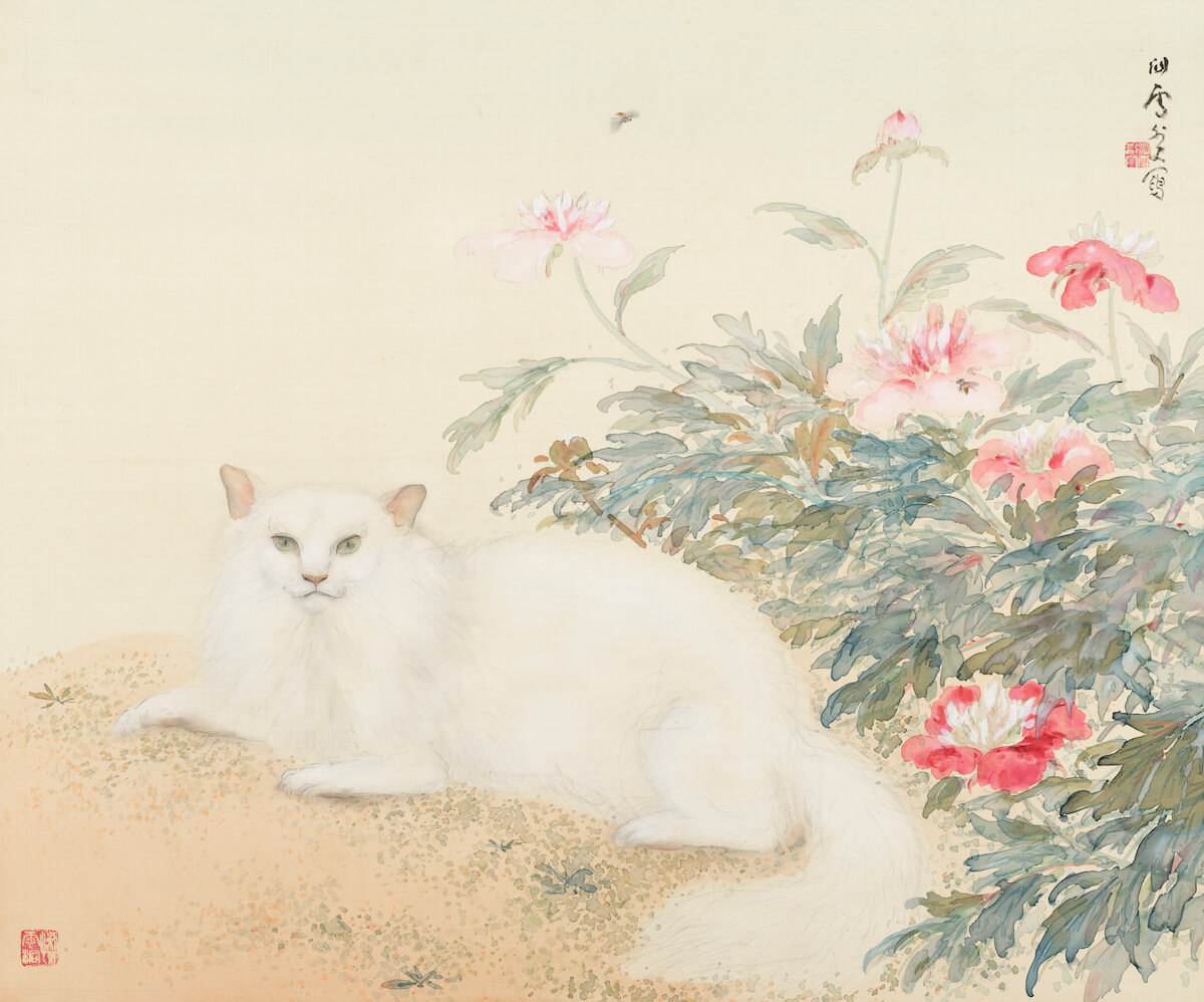 橋本関雪 芍薬白猫図