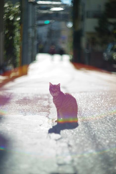 猫の写真作品、光・一瞬「滲む世界」 by 阪井壱成