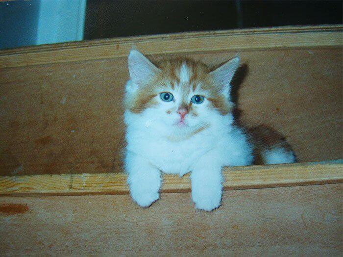現役最高齢の猫だったメインクーンの「ラブル(Rubble)」の子猫時代の写真