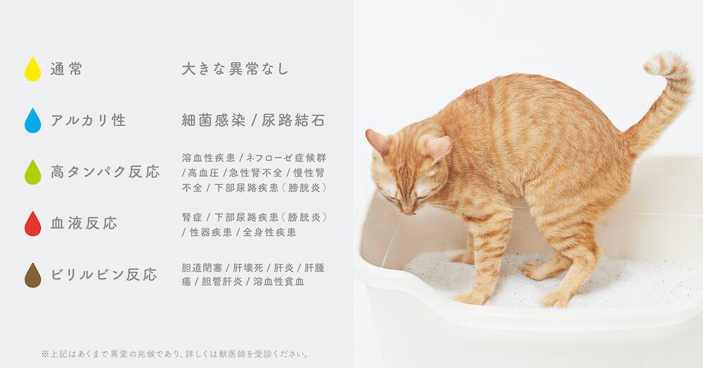 猫砂「しぐにゃる」の色の変化と、色が表す病気の兆候