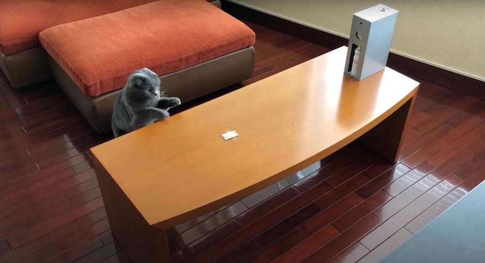 テーブルに飛び乗ろうする猫