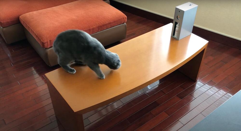 テーブルに飛び乗った猫