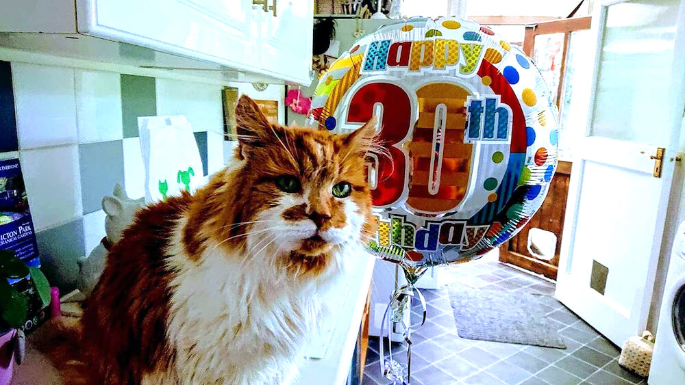 現役最高齢の猫だったメインクーンの「ラブル(Rubble)」が30歳の誕生日を迎えたお祝いの写真