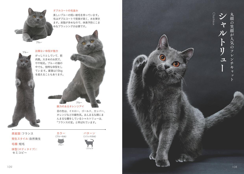 シャルトリューの写真と解説ページ by 書籍『世界中で愛される美しすぎる猫図鑑』