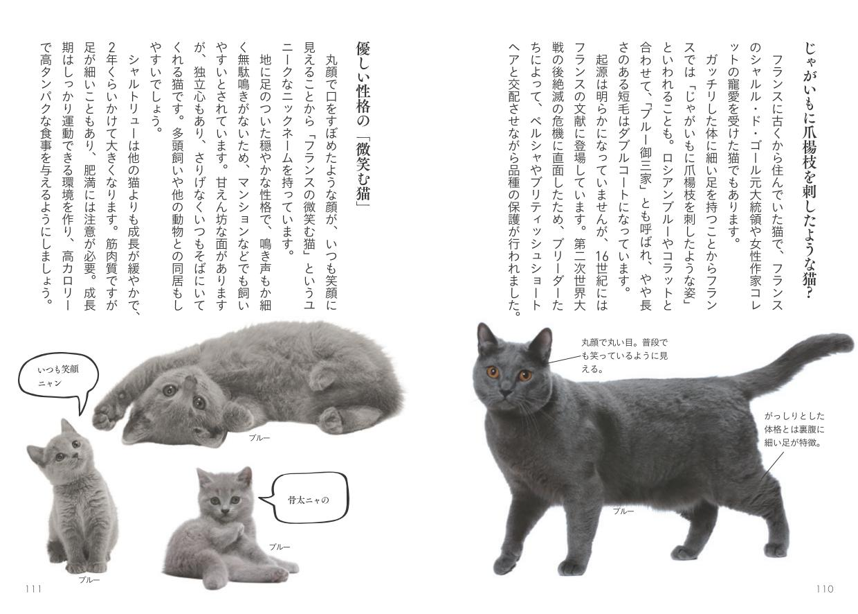 シャルトリューの歴史と性格について解説したページ by 書籍『世界中で愛される美しすぎる猫図鑑』