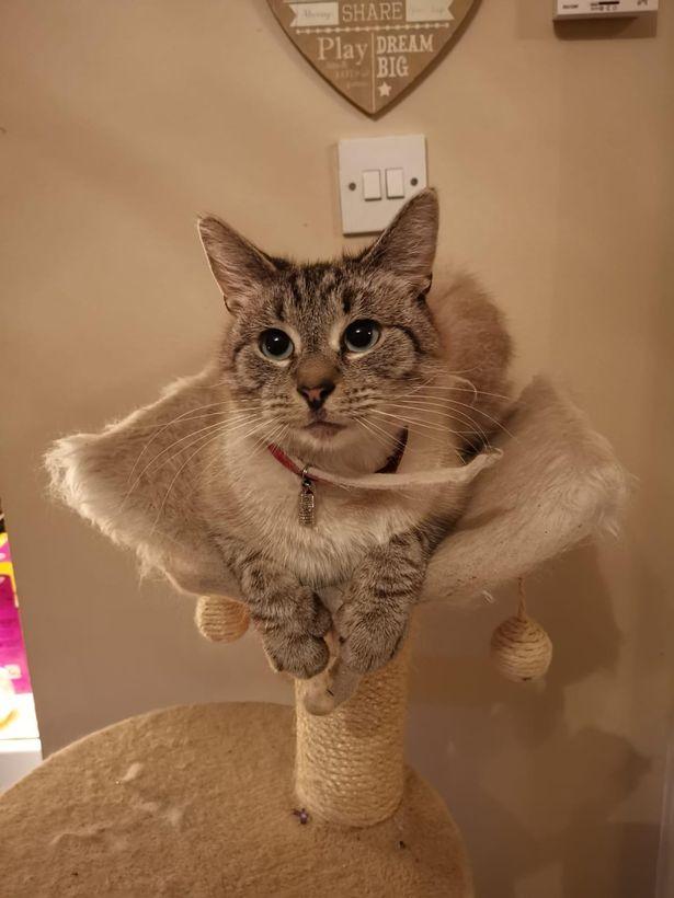 ウェールズの誘拐メモ騒動で有名になった猫のGandalf(ガンダルフ)