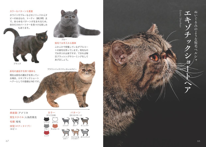 エキゾチックショートヘアの写真と解説ページ by 書籍『世界中で愛される美しすぎる猫図鑑』