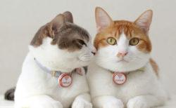 猫のジャンプ回数が病気の早期発見に繋がる可能性も!日本動物高度医療センターの研究結果が米科学雑誌「PLOS ONE」に掲載