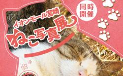猫写真家・モリケンさんの写真展も!イオンモール宮崎で2つのネコ写真展が同時開催中