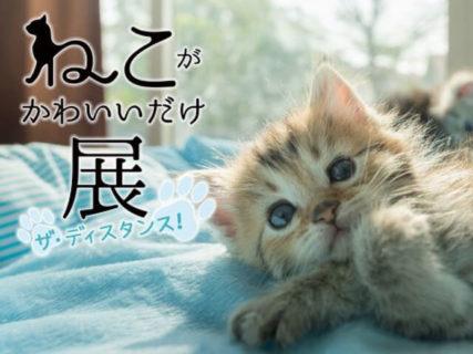 花江夏樹さんの愛猫も展示されるニャ!「ねこがかわいいだけ展」リアル&ネット会場で同時開催