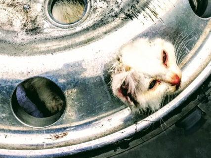 さすがレスキューのプロ!タイヤの穴に挟まった猫ちゃんを消防隊員が救出→助けられた猫は…