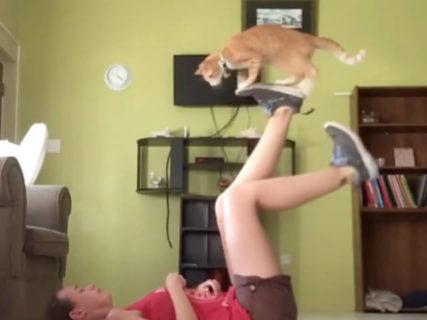 こんな猫がいたら運動も続けられそう!カナダで飼い主のエクササイズに付き合う猫ちゃんの動画が話題に