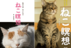 猫をイメージして5分でリフレッシュ!猫の写真を眺めながら瞑想を学べる書籍「ねこ瞑想」
