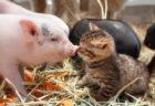 猫だけでなくキツネやウサギさんも!200点以上の動物作品を集めた「もふあつめ展」が開催