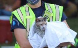 取り残された猫とモルモットを消防士が救出!米国メリーランド州で起こった火事の一部始終