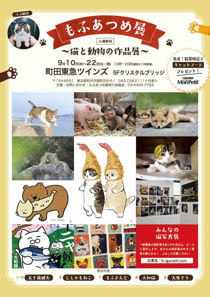 猫を中心とした動物の写真やイラスト作品を展示する「もふあつめ展」メインビジュアル