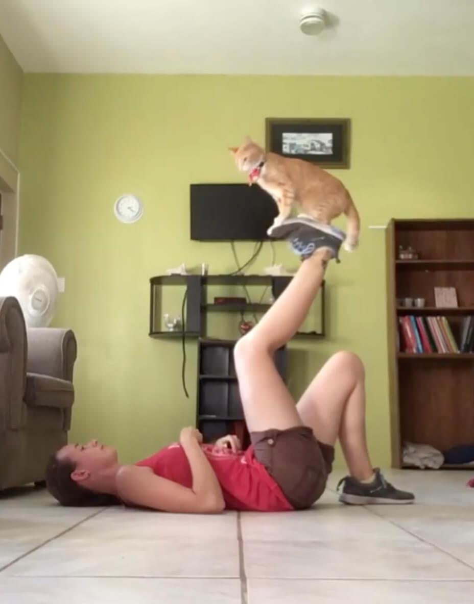 飼い主さんの足の上でトレーニングの様子を見守る茶トラ猫