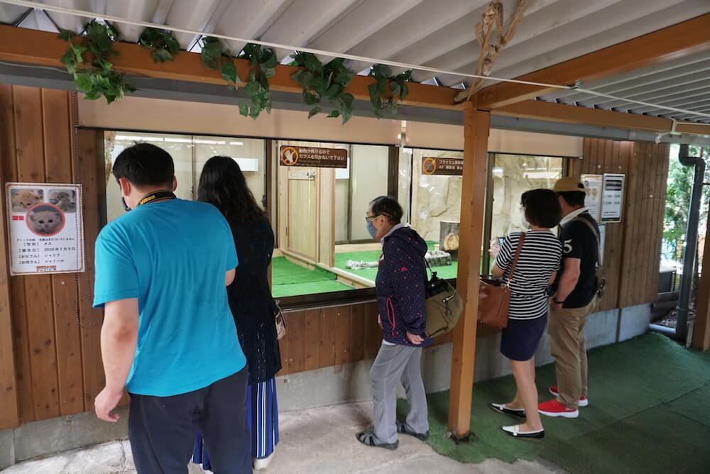 スナネコの赤ちゃんの展示スペースで観賞する来園者たち