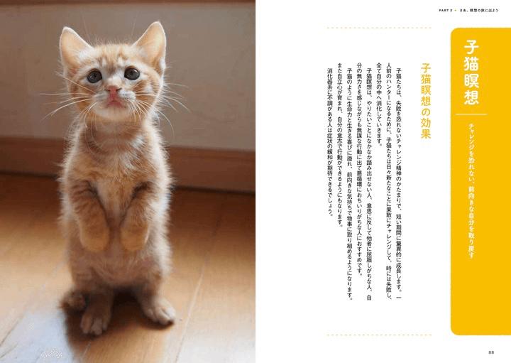 「ねこ瞑想」の子猫の効果を解説したページ