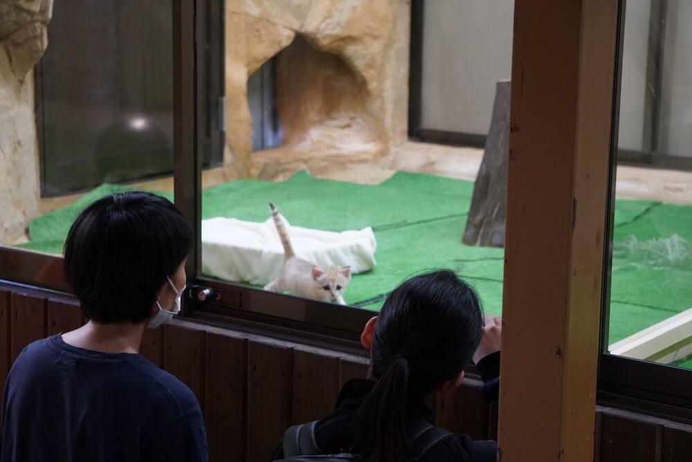 ガラス越しにスナネコの赤ちゃんを観賞する人々 by 那須どうぶつ王国